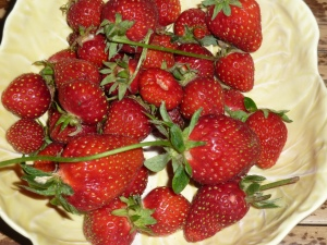 Fresh picked strawberries from our patch, early summer.